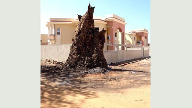 2012-2014 > // The Dakar series // Ouakam, 'Une forêt dense et sombre'.